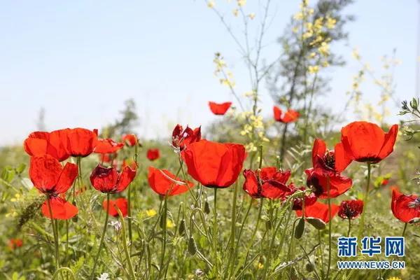 http://www.xaxlfz.com/xianxinwen/35820.html