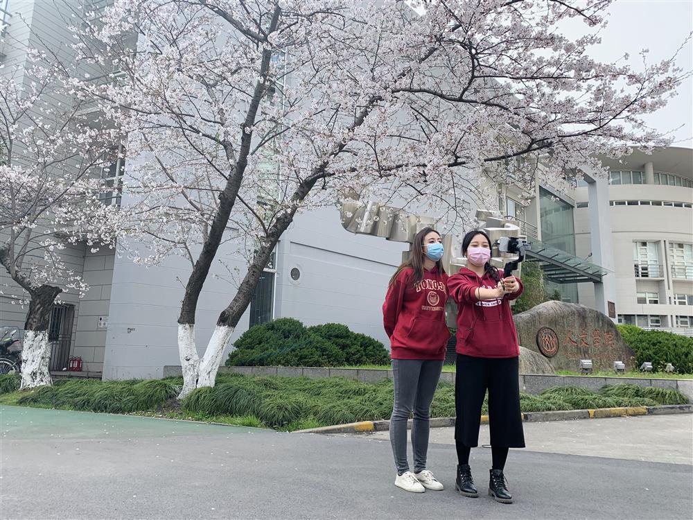 """赏樱花、做青团,上海这所大学开通直播""""云游校园"""""""