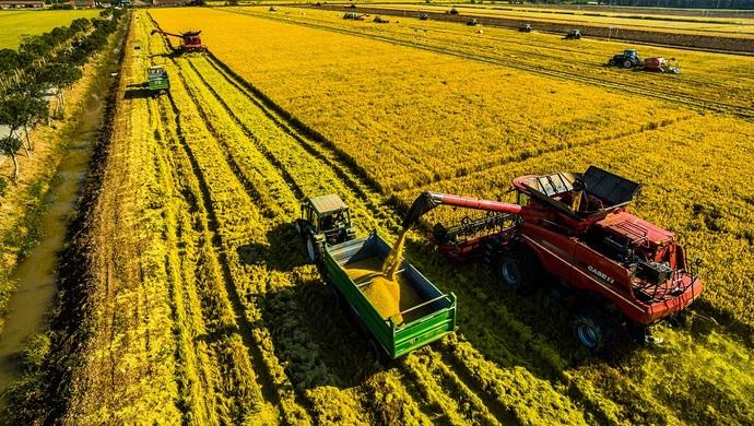 """不用化学肥料、不施化学农药的大米来了!""""两无化""""崇明大米今秋首上市"""