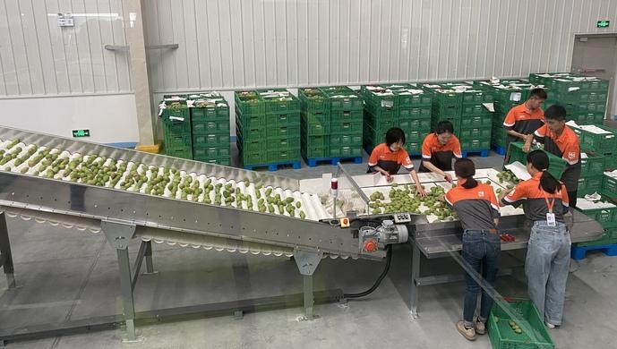 阿里建村、京东种菜、拼多多找人工智能养草莓,互联网公司对农业又心痒了