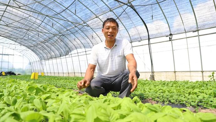 """绿叶菜卖每斤25元,客户源源不断增加!上海这个蔬菜种植基地有何""""魔力""""?"""
